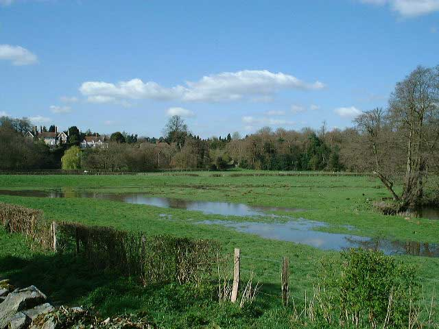 the_water_meadow1
